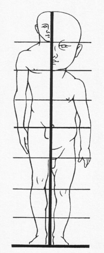 http://vos.palestra.cz/skripta/anatomie/3_1.jpg